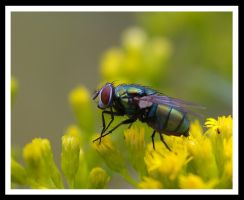 Fat Fly by jesse-botanical