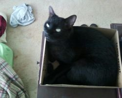 my cat loves his box by Ratchetluver13