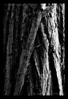 Bark 4 of 6 by dspittard