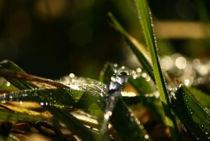 Droplets II by Yanathrae