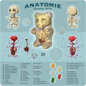 http://th02.deviantart.net/fs26/300W/f/2008/136/7/f/Anatomie_Gummi_Bar_by_freeny.png