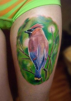 Waxwing by STROGRUS