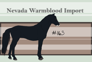 Nevada Warmblood 163 by fishebone