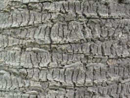 Wood Bark Texture Stock by Somnovore