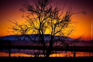 Central Valley Sunrise by jpnunezdesigns