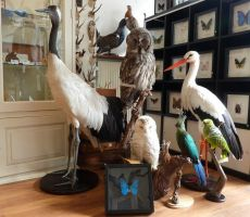 Our taxidermy work! by Museumwinkel