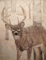 Winter Whitetail by deerhunter2012