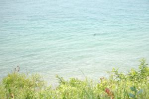 Lake of Michigan by Fiction-Art-Author