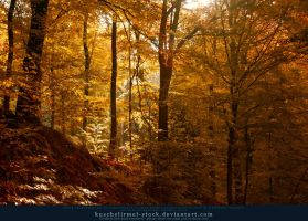 Autumn 05 by kuschelirmel-stock