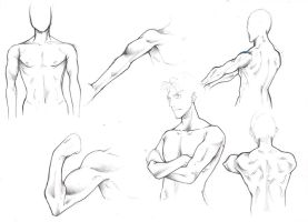Male Anatomy - Training-  3 by yuukitaachi