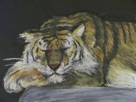 tiger by nupharHALL
