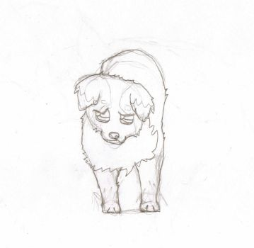 Day One: Border Pup Sketch by xtutorxheartx