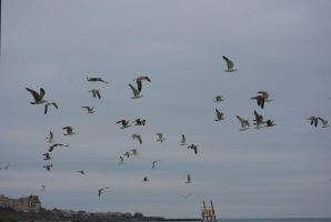 Seagulls in flight... (Constanta 2011) by danyel-i