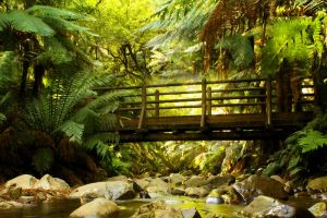 Forest Bridge Stock 1 by blaisedrew62