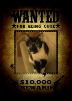 Wanted: Captain Jack. Crime: Being Cute by blackhavikgraphics