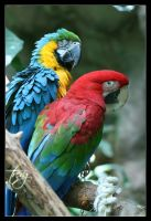 Parrots by trevg