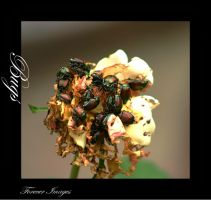 Bugs by xXForeverImagesXx