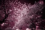 Infrared Trees by sarahdope
