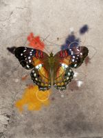 Butterfly by LHufford