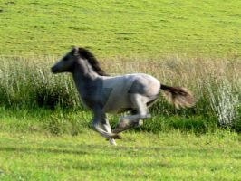 Running Foal by WorldII