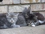 Kittens by Catherinex13