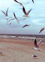 sea gulls by BobbyVD