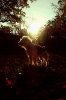 my dog is a super hero by oposowe