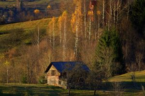 living in autumn by anmaria