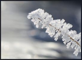 Frost by LivGreteS
