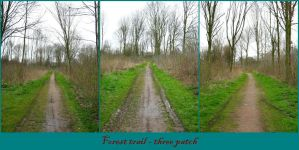 Forest trail three patch by Tap-Photo-and-Co