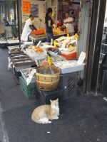 The Life of a Cat in Chinatown by crazedhobbit