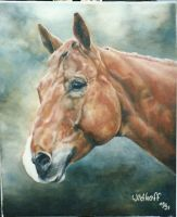 Quarter Horse Portrait by pocavistaranch