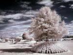 Infrared Show Garden by La-Vita-a-Bella