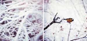 Silent winter by Tamerlana