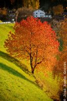 Autumn - tree by jorago