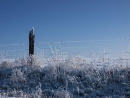 snowy fence 23 by fotophi