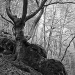 The Tree Rules Over Rocks by Quit007