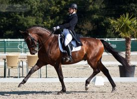 National Dressage and Jumping_124 by CalyHoney