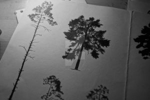 Tree Silhouette designs by Tarin-Moore