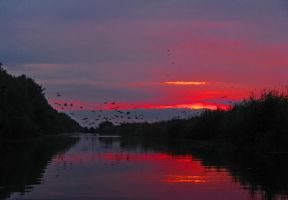 The Danube Delta Sunset by Nazareanu