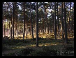 ...In The Woods III by NorN