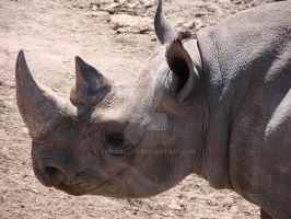 The Face Of A Rhino by Teh-Valles