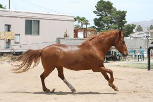 Horse 148 by Mustang4-Stock