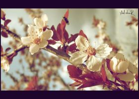 the first spring by ad-shor