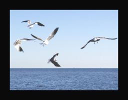 Birds in Pascagoula by Curim