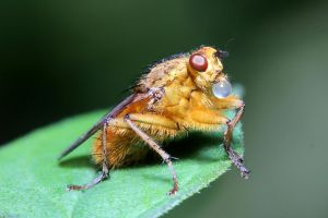 The Fly 04 by s-kmp