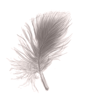Feather by horskraz