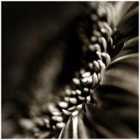 Life Is In The Details XI by GreenEyedHarpy