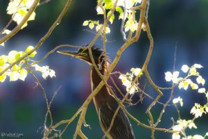 Green heron crest by CyclicalCore