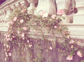 Antique Rose by Ninelyn